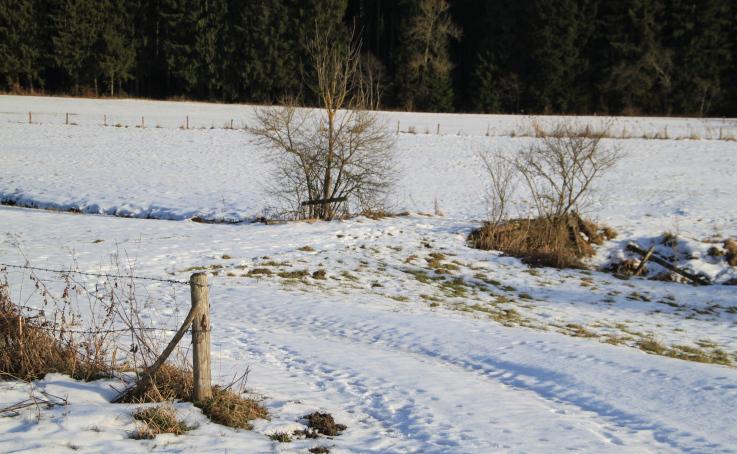 frösche im winter
